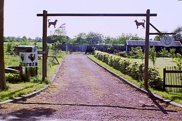 The driveway to the kennels